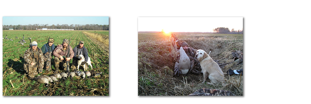 Canada Goose Hunting In Md And De Doa Outfitters Big Game Snow Goose And Duck Hunting In New England Eastern Shores Areas
