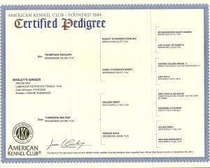 pedigree certificate fox red labrador